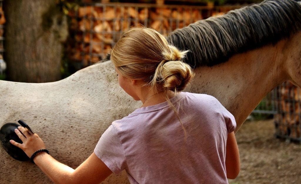 horse grooming essentials