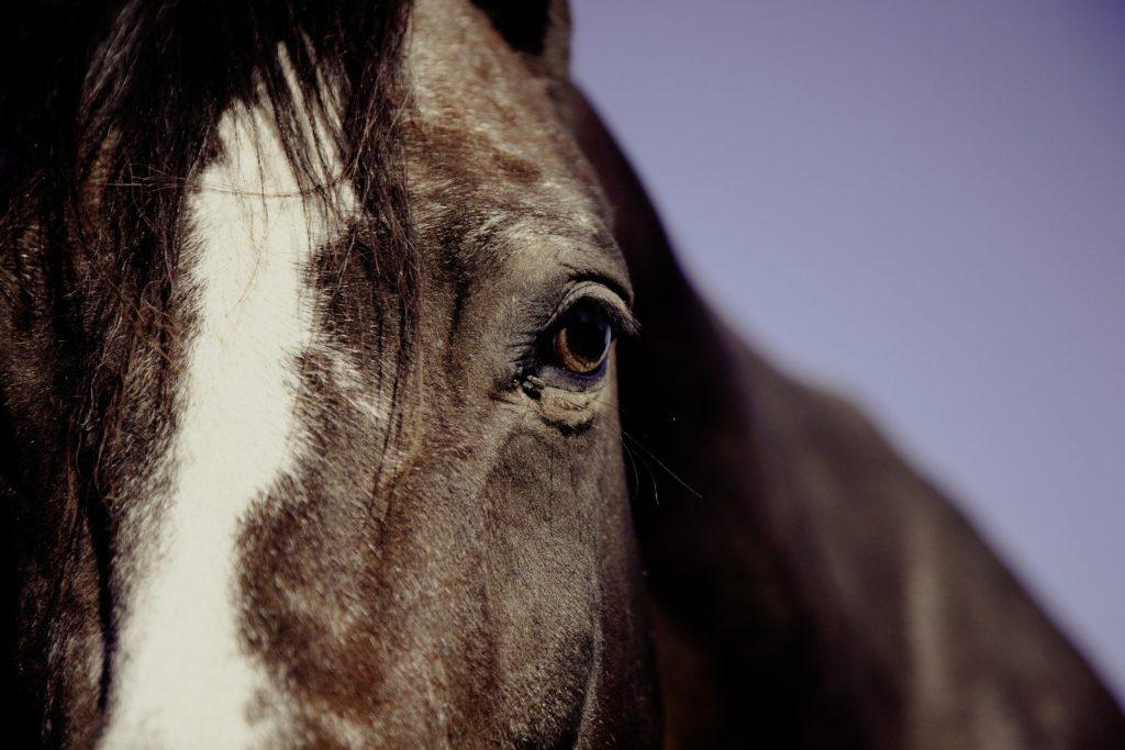 horse intelligence