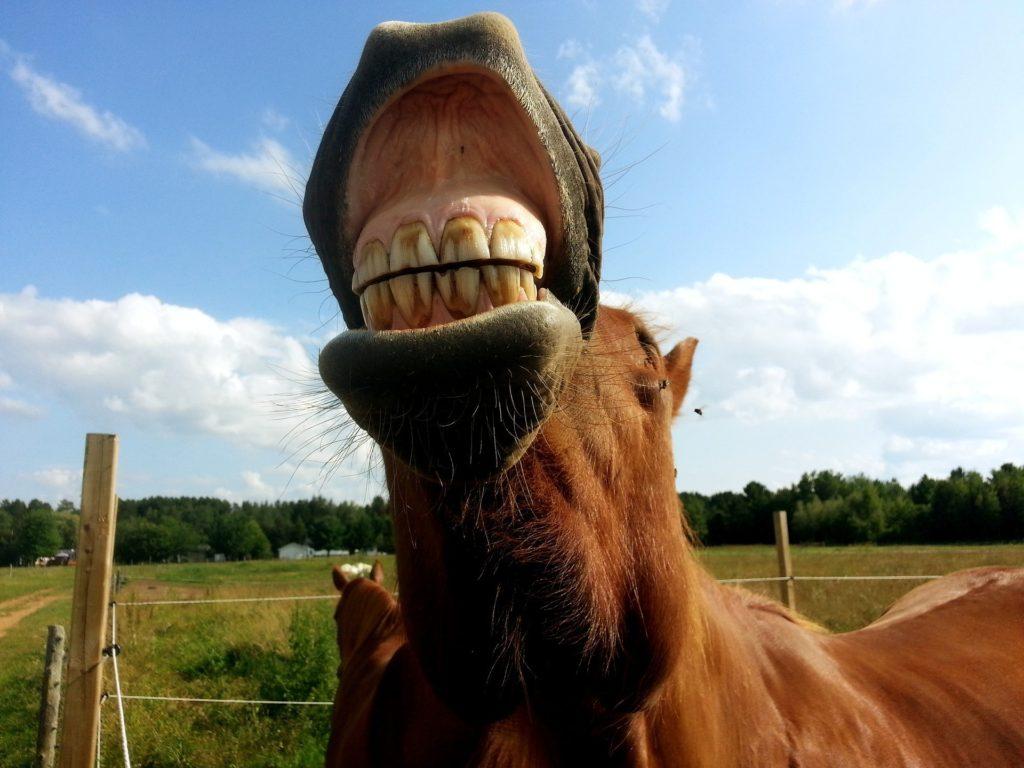 horse teeth smile
