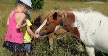 horse facts for kids with ponies