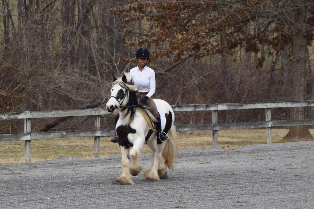 posting trot horse