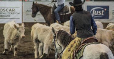 turn back horse in cutting pen