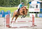 different types of horse jumps