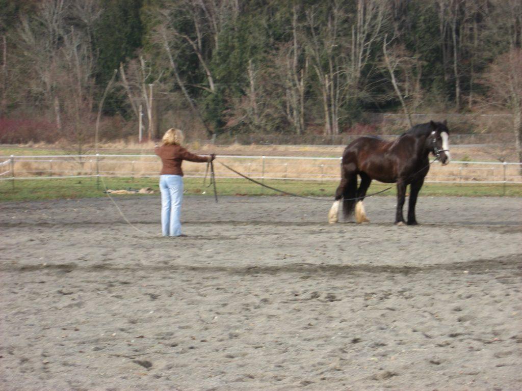walk-horse-lunge