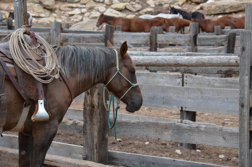 horse training tips