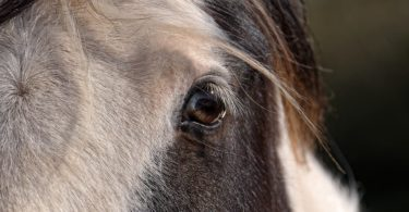 horse expression