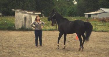horse boundaries