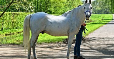 horse standing still