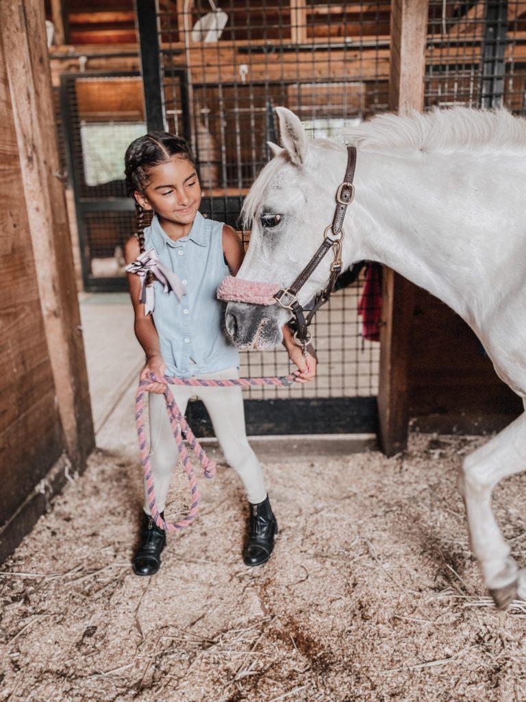 child pony in stall
