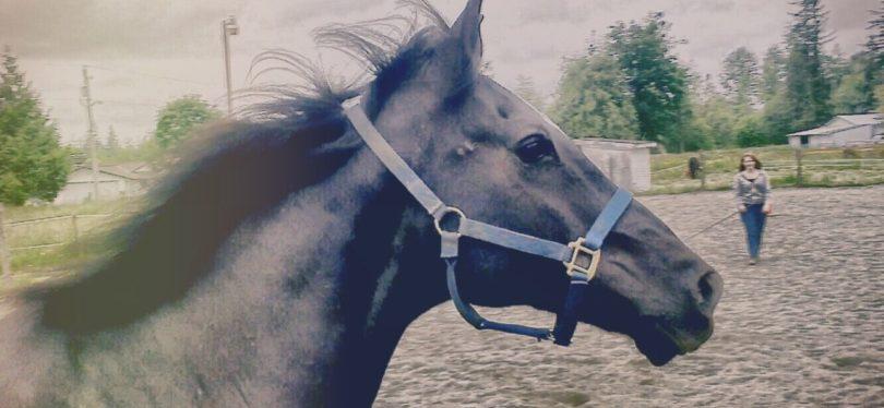 horse-lunge-line