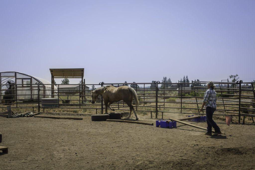 horse groundwork bridges