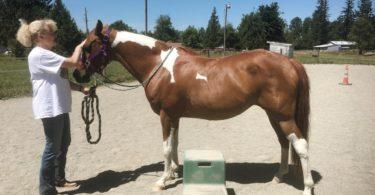 bareback riding horse