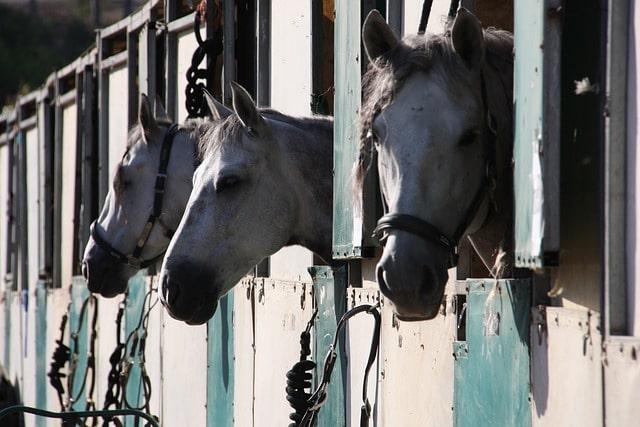 row of horses