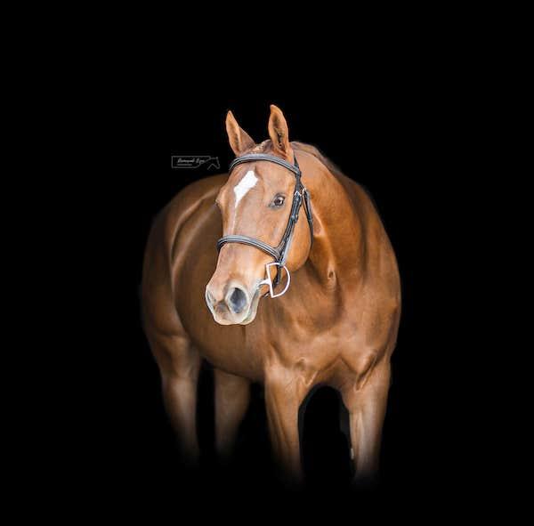 black background photography of horse