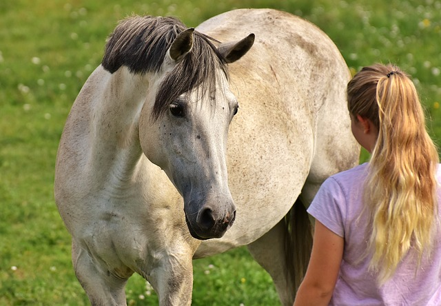 horsemanship boundaries