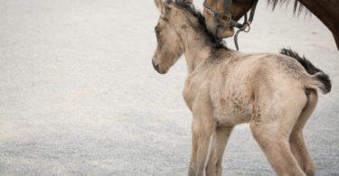 curious horse foal