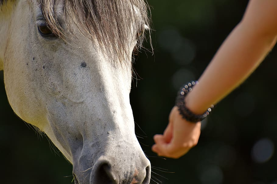 horse human bonding