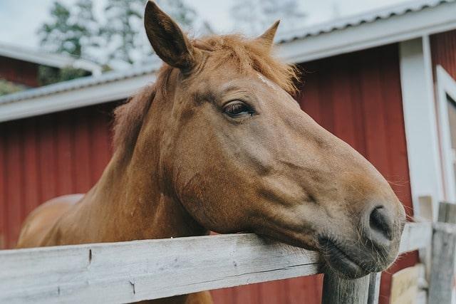 horse barn face
