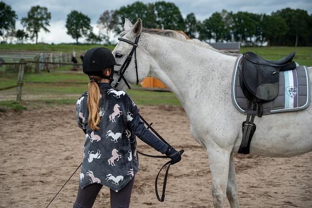 setting boundaries for horse