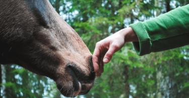 horse bonding approach