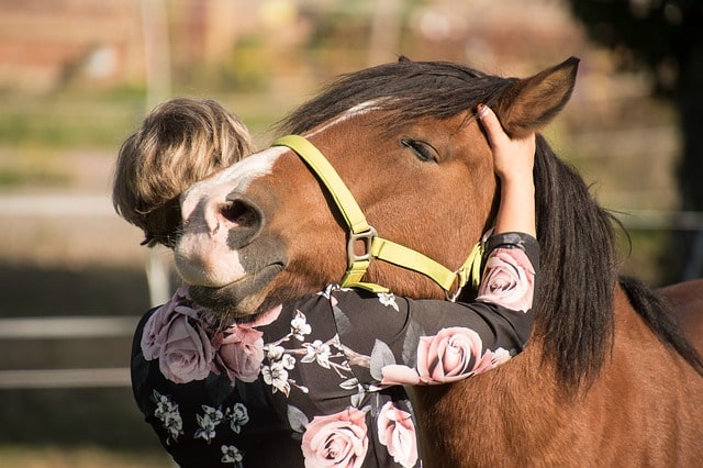horse gentle touch
