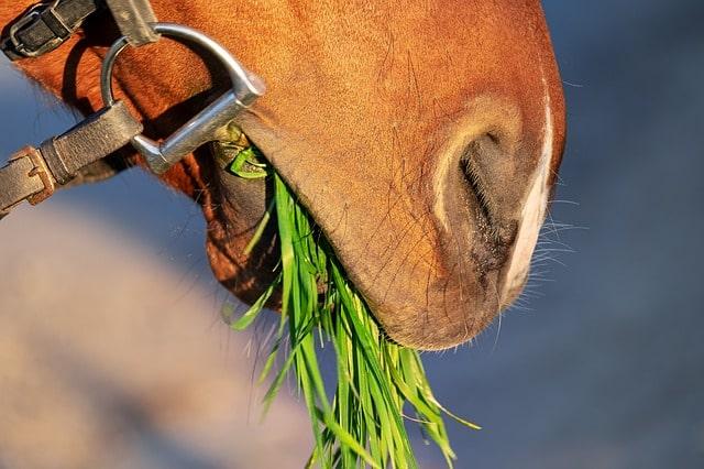 horse boundaries grass