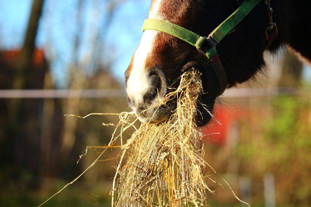 horse expenses hay