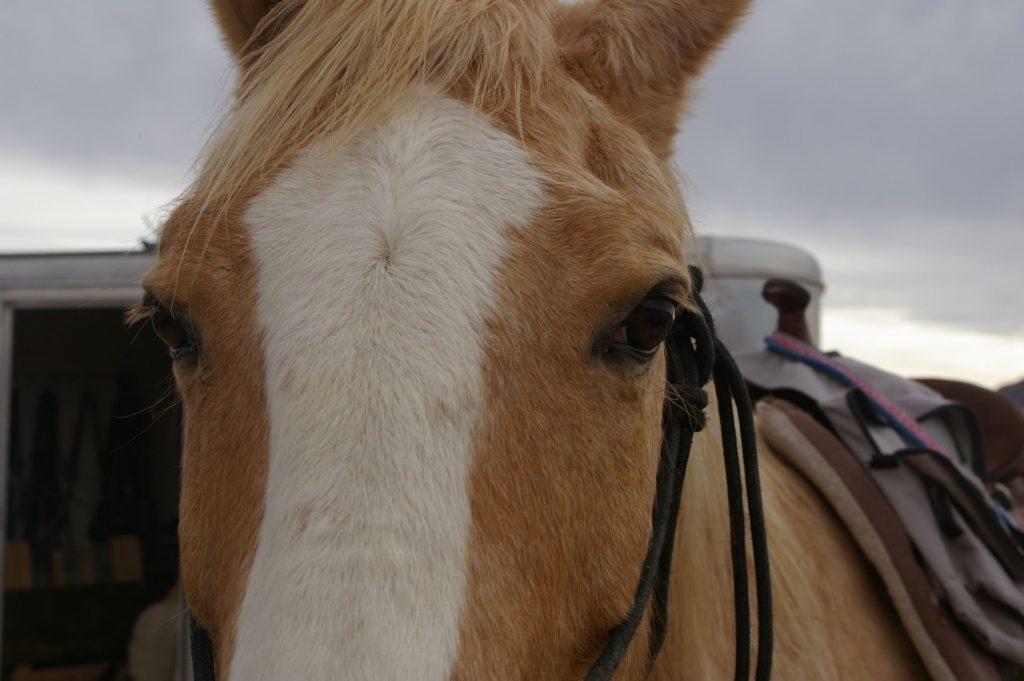 saddle horse anxiety