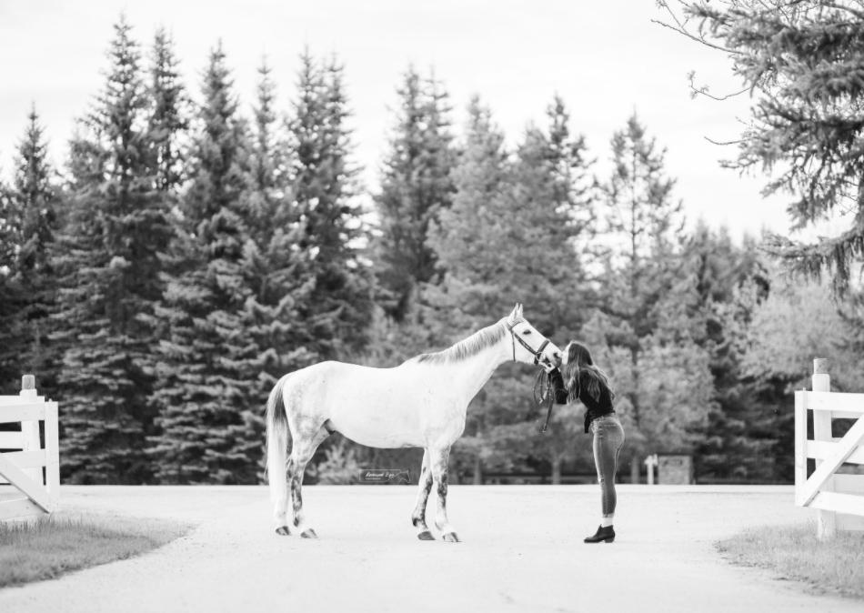 horse photo shoot kiss