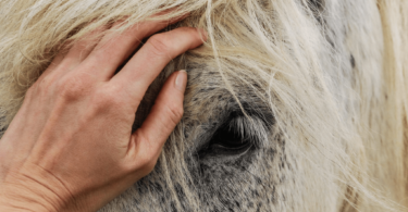 hand white horse face
