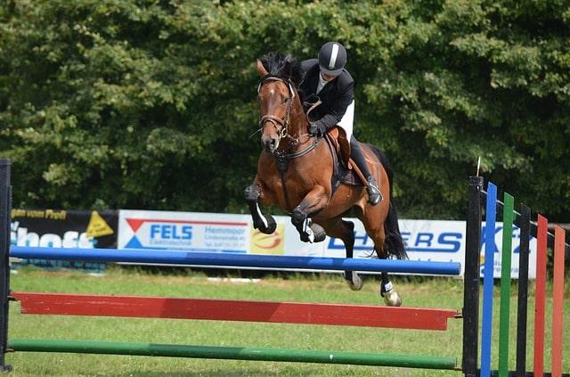 horse show girl