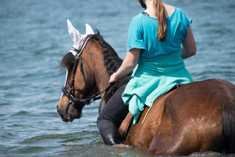 horse blogger