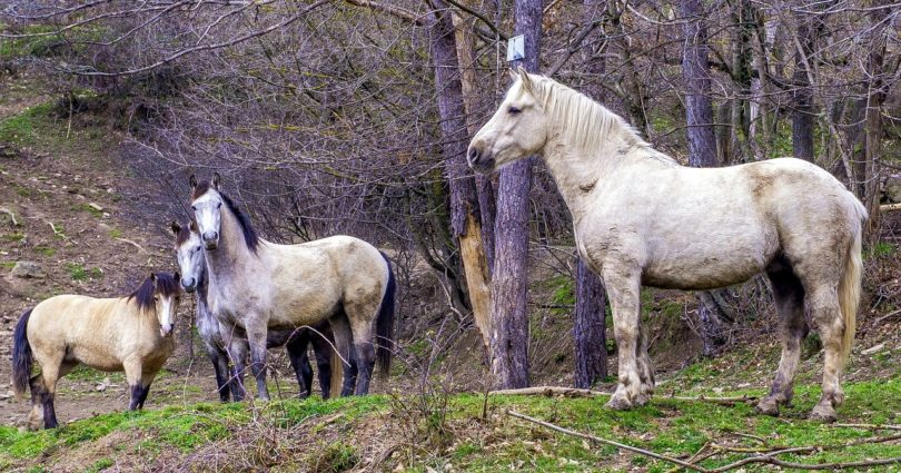 horses and boundaries