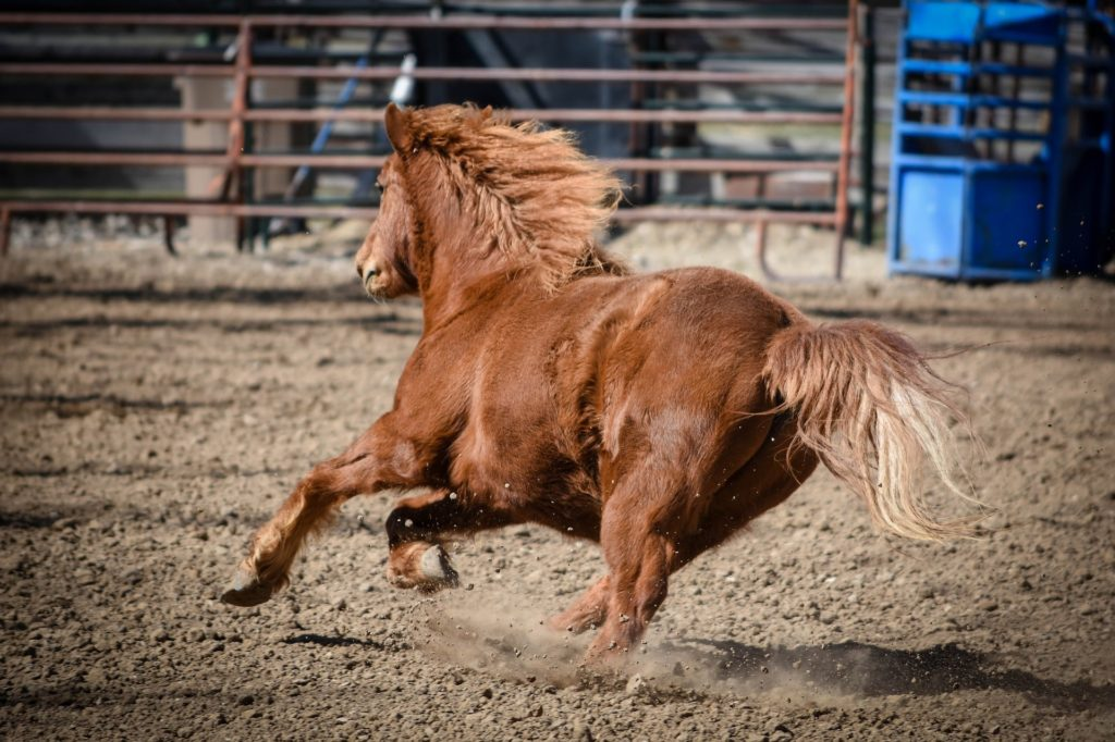 bolting horse