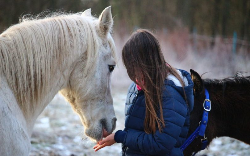Rescue abused horse girl
