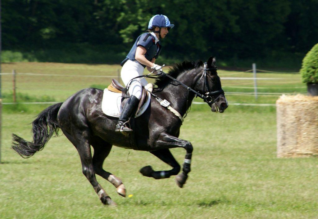 horse running cross country
