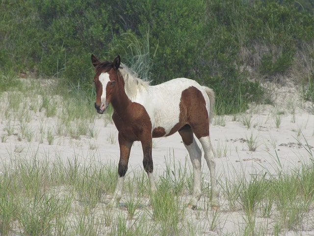 horse foal standing in sand