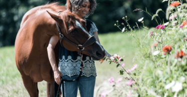 stacy westfall forever horse