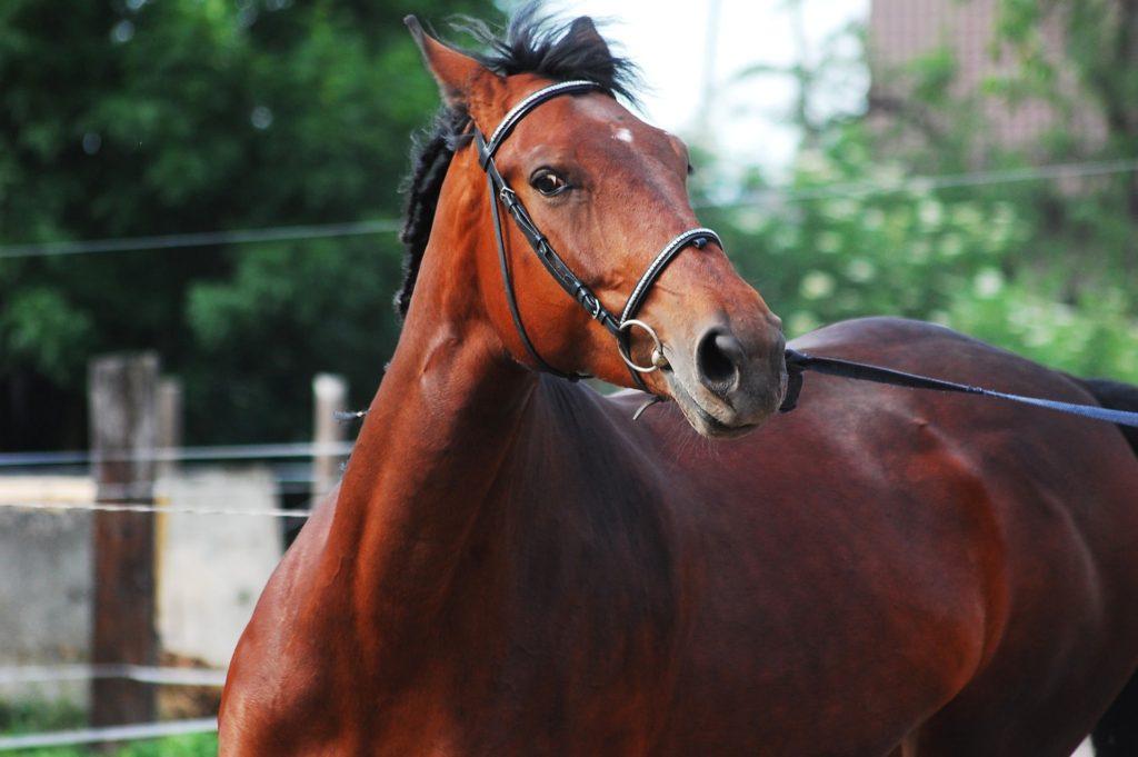 upset horse