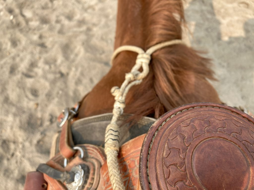 horse riding view