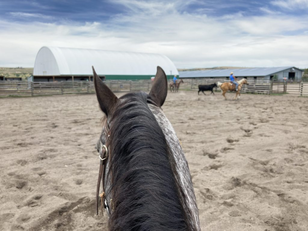 appaloosa mare riding