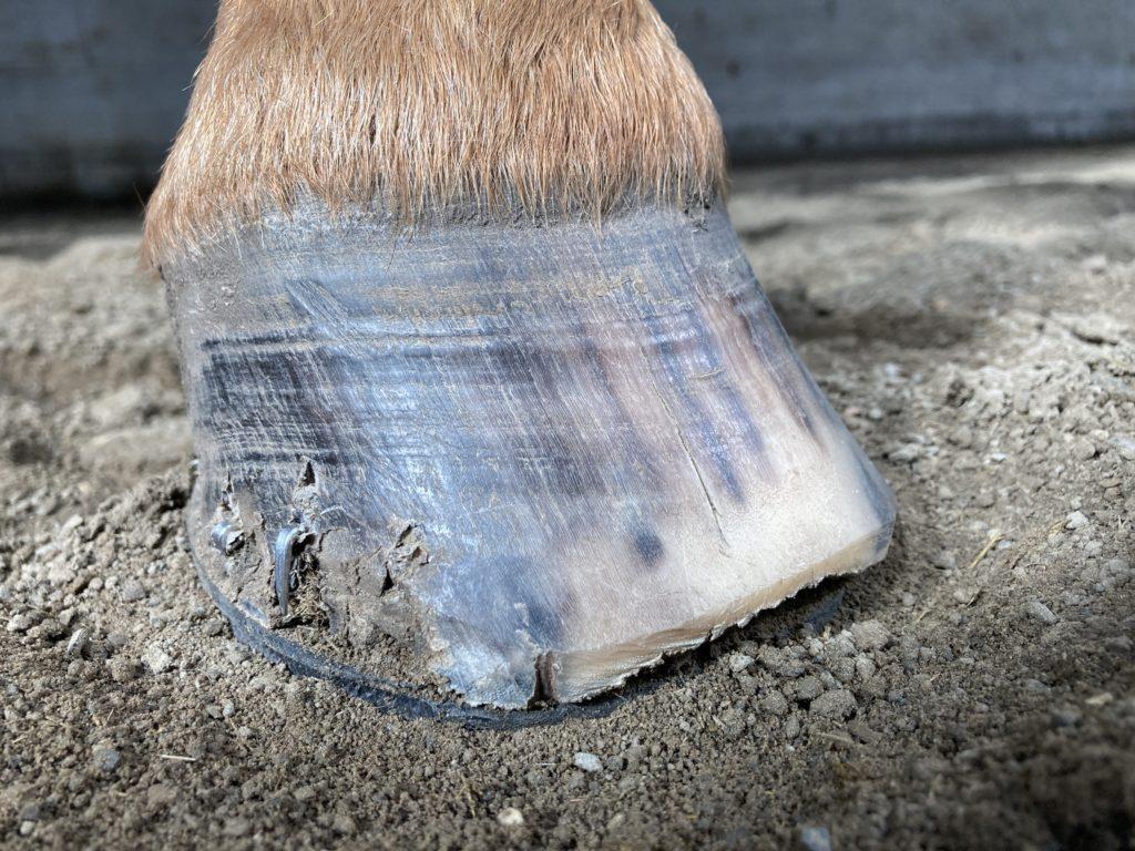 damaged horse hoof
