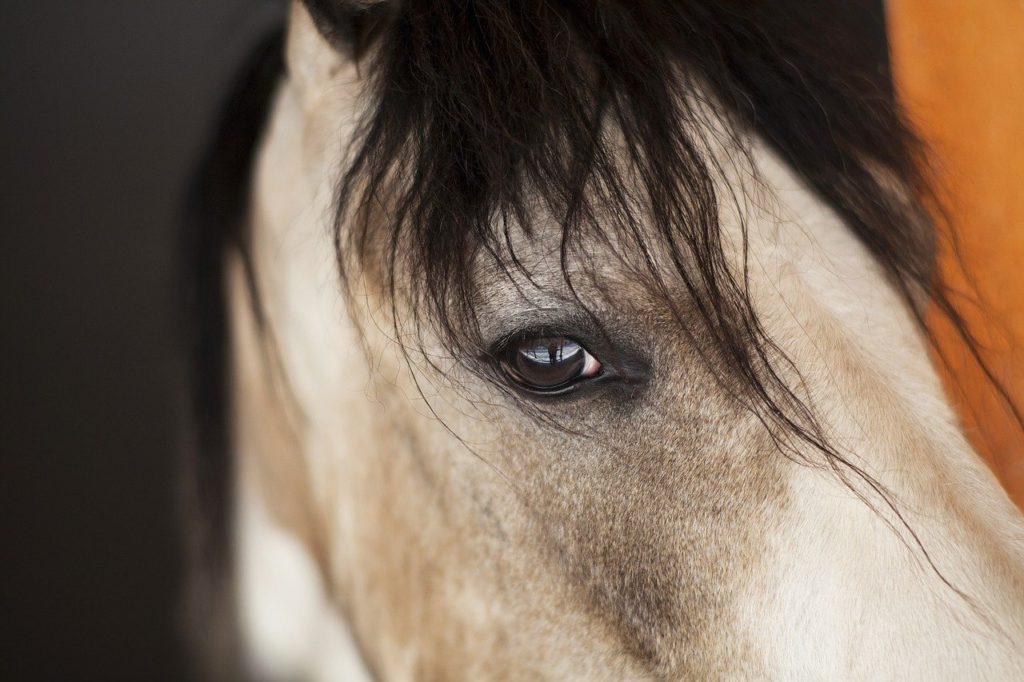 horse emotional face