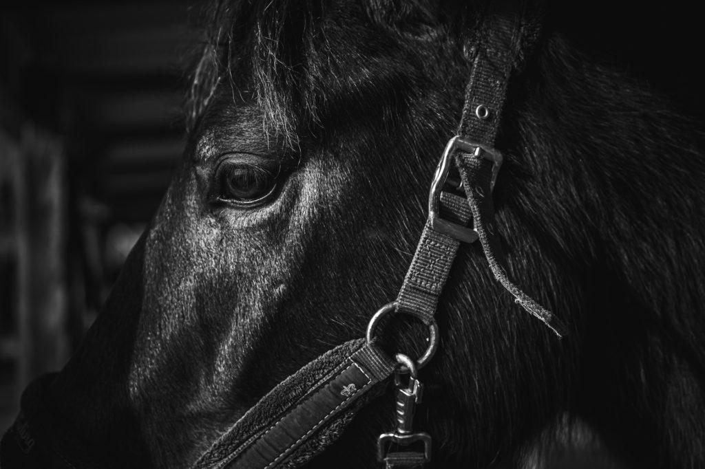 dark horse eyes