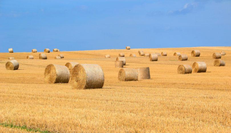 horse hay field