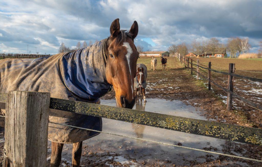 horse paddock blanket