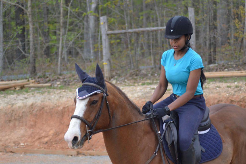 sarah harris bay horse