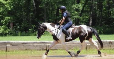 sarah harris sisters horsing around