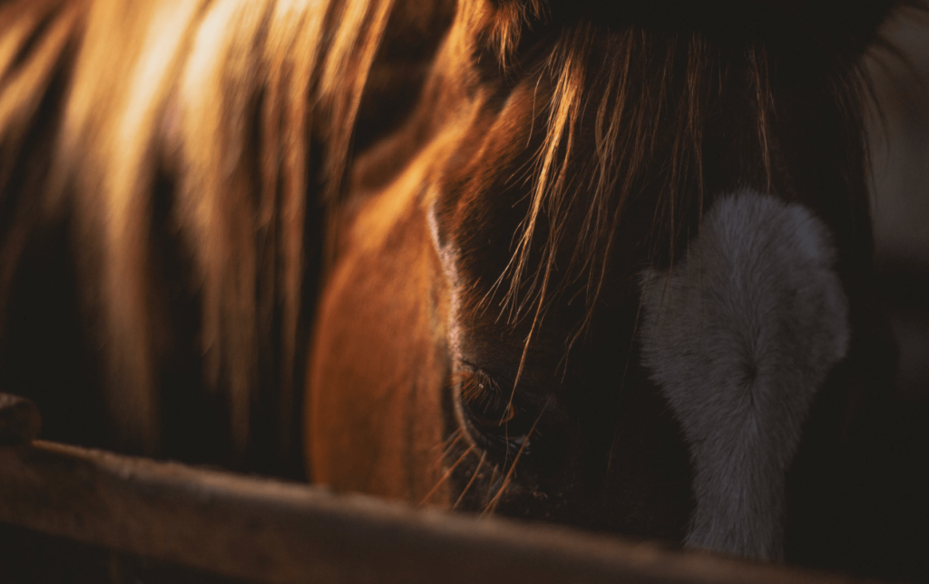 sad chestnut horse
