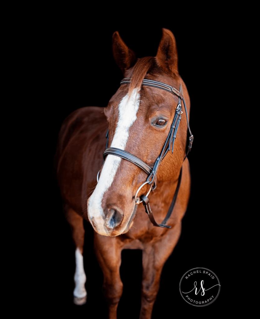 black background horse photography
